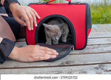 Girl pet owner carries her cat in a special plastic cage carrier for a walk or in a veterinary clinic