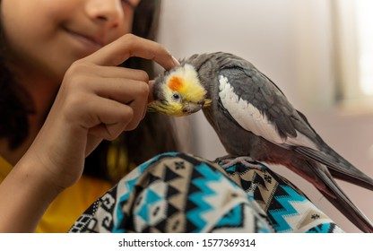 Girl petting her pet cockatiel bird perched on her leg showing cuteness and love