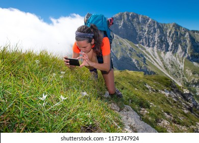 A girl photographs with smartphone the edelweiss flowers during a mountain excursion.