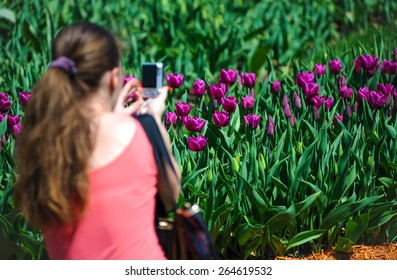 The girl photographs tulips