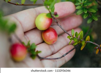 Girl picking berries in the woods. Decorative twig of cranberry.