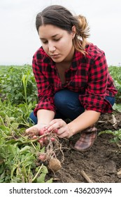 girl is picking potato in field