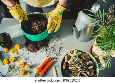 Girl planting a plant in green pot