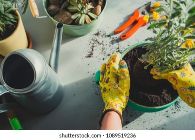 Girl planting a plant-top view
