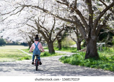 Girl playing with a bicycle on the cherry blossom path