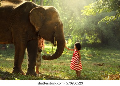 The girl was playing with the elephants in the wild.
