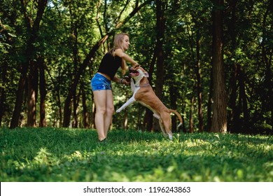 Girl playing tug of war with her dog and a stick on a summer day