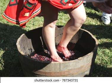 The girl presses the grapes with her feet in a wooden tub. Wine Festival