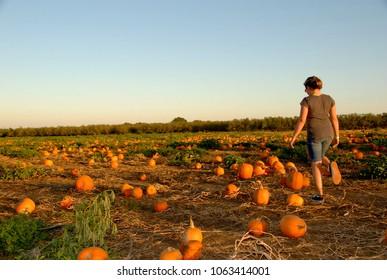 Girl in a pumpkin patch