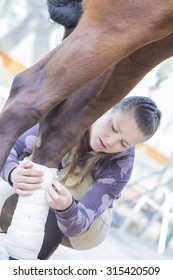 girl is putting white bandages on a purebred brown horse's legs at the byre - focus on the face