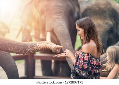 the girl reaches out to the trunk of an elephant. in soft focus with illumination.