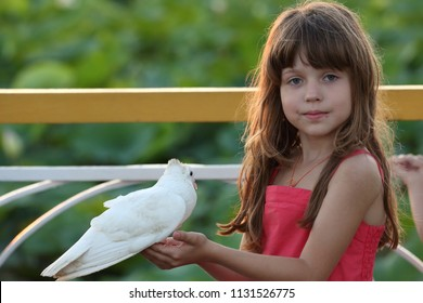 girl in red dress holds a live white dove