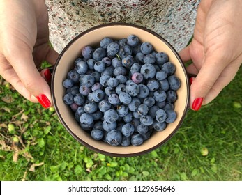 Girl with red nails holds bowl full of ripe blueberries. Horizontal orientation. Green grass background.
