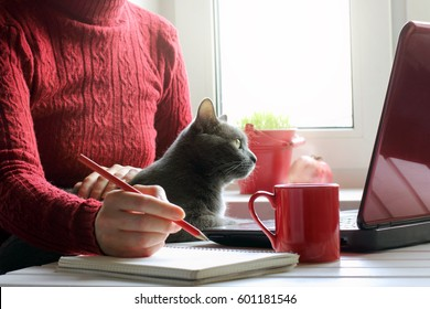 Girl in red, working at the computer with a cat / spending time together in a favorite setting