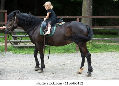Girl ride on horse on summer day. Child sit in rider saddle on animal back. Equine therapy, recreation concept. Friend, companion, friendship. Sport, activity, entertainment. riding school
