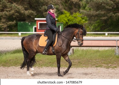 Girl rides her brown horse (New-Forest-Pony)