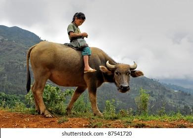 Girl rides a water buffalo