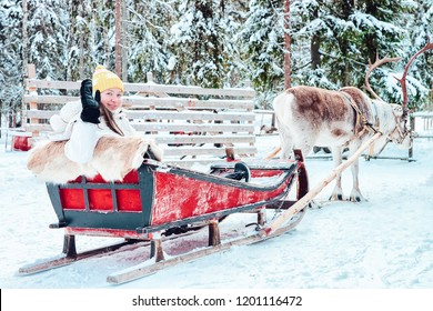 Girl riding Reindeer sleigh in Finland in Lapland in winter.