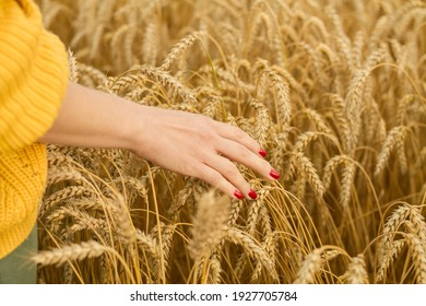 the girl runs her hand over the golden ears of ripe wheat