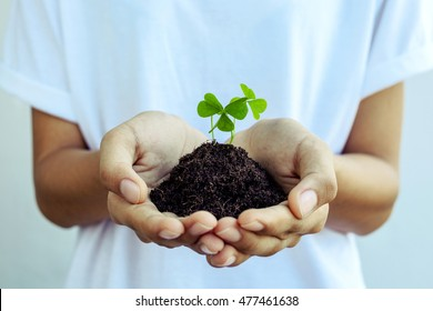 The girl 's hands holding clover plants. Symbol of hope and love concept. Closeup clovers leaves with selective focus depth of field.