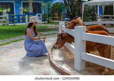 The girl sat feeding the dwarf horse.