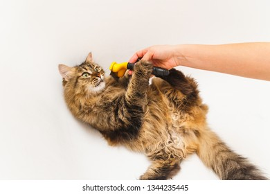 A girl is scratching a cat with a furminator. White bathroom as background.