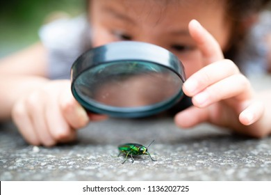 Child Looks at the Beetle Images, Stock Photos & Vectors