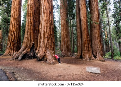 Girl in Sequoia National Park