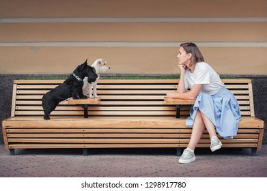 Girl sitting on long wooden banch in front of two small dogs and looking at them. Side view