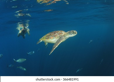 Girl snorkels with sea turtle