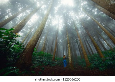 Girl standing in The Makes' forest in Saint Louis, Reunion Island
