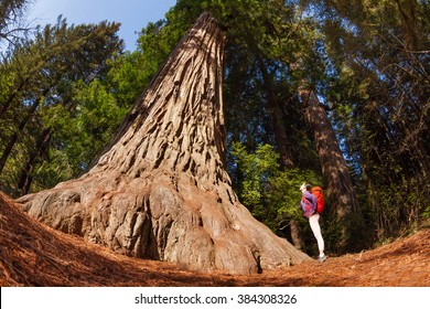 Girl standing near the big tree in Redwood California during summer sunny day fisheye view from below