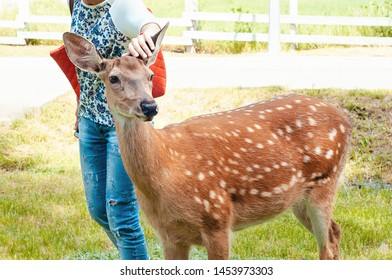 A girl in a summer park stroked on the head of a young bambi