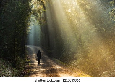 Girl in sun rays walking with beagle dog on leash in forest path.