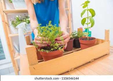 Girl taking care of home grown plants / spices.