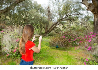 Girl taking photos with her phone of the bird in beautiful  blooming garden. Magnolia Plantation and Gardens, Charleston, South Carolina, USA