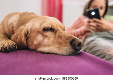Girl taking picture of a dog sleeping on the purple bed