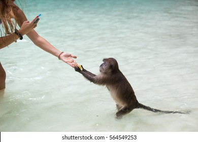 Girl taking a picture of the monkey on her phone, while it takes the food from the girl's hand.