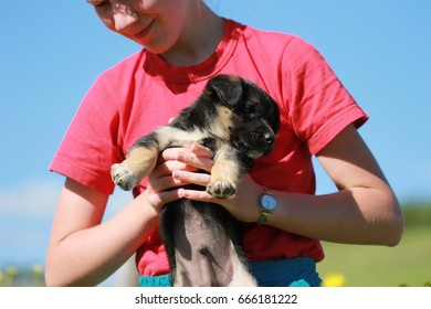 Girl teenager in the hands of a cute and funny puppy. Walk the girl in a red T-shirt with her pet. Friendship of man and dog. The most faithful friend of man. Sunny weather and a beautiful summer day