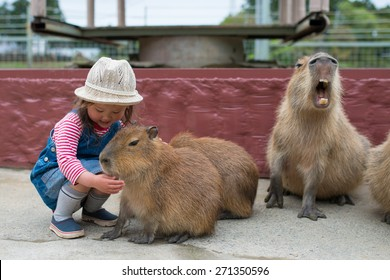 Girl touch with the capybara