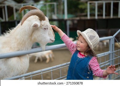 Girl touch the goat