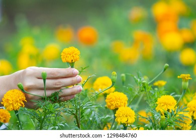 Girl touching a marigold flowers in the field with nature blurred background.