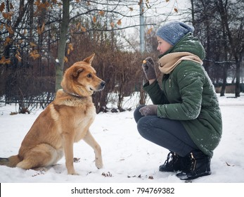 Girl to train a dog. food in the hand of the hostess of the animal. Walk in the fresh air, snow, winter