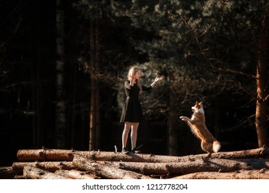 girl trains dog Border Collie breed in the forest