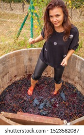 girl tramples feet, squeezes juice and crumples black grapes in a wooden barrel according to the ancient tradition of making wine