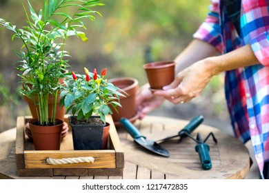 girl transplants flowers in the garden. flower pots and plants for transplanting