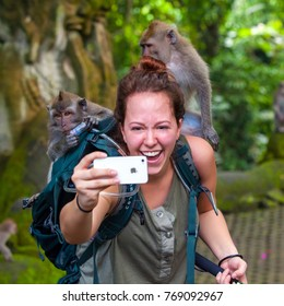 Girl in Ubud Monkey Forest, Bali, Indonesia - March 2015. A woman makes a selfie on an iphone with monkeys climbing over her body, smiling and laughing.