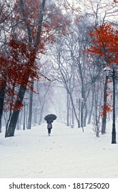 Girl with umbrella walking on the path. Winter. Trees with red leafs.