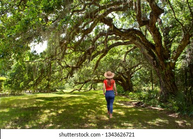 Girl walking alone on the pathway under beautiful huge  oak trees on summer morning. Magnolia Plantation and Gardens, Charleston, South Carolina, USA