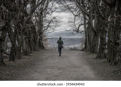 A girl walking among the dark trees